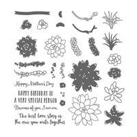 Oh So Succulent Photopolymer Stamp Set